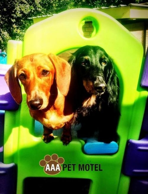 AAA Pet Motel - Accommodation Broken Hill