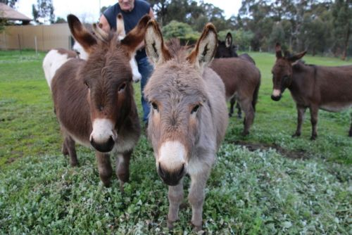 Donkey Tales Farm Cottages - Accommodation Broken Hill