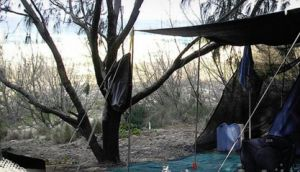Main Beach Foreshore Camping Grounds - Accommodation Broken Hill