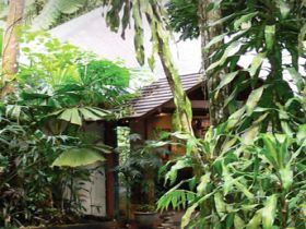 Heritage Lodge and Spa - In the Daintree - Accommodation Broken Hill