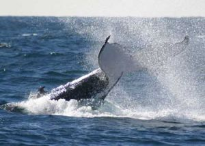 Whale Watching Sydney - Accommodation Broken Hill