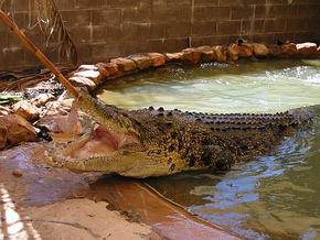 Wyndham Zoological Gardens and Crocodile Park - Accommodation Broken Hill