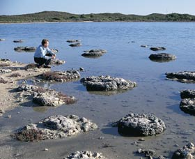 Lake Thetis Stromatolites - Accommodation Broken Hill