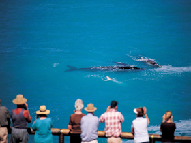 Whale Watching At Head Of Bight - Accommodation Broken Hill