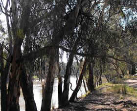 Mia Forest Drives Narrandera - Accommodation Broken Hill