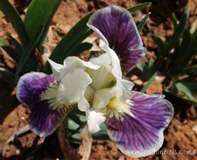 Sunshine Iris Nursery - Accommodation Broken Hill