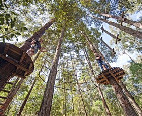 TreeTop Adventure Park Central Coast - Accommodation Broken Hill
