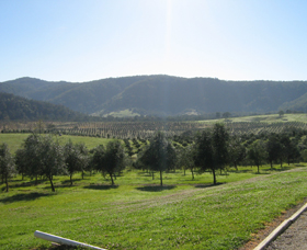 Hastings Valley Olives - Accommodation Broken Hill