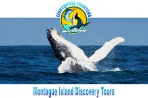Lighthouse Charters Narooma - Accommodation Broken Hill