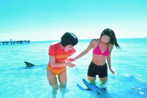Monkey Mia Dolphins  Shark Bay Air Tour From Perth - Accommodation Broken Hill