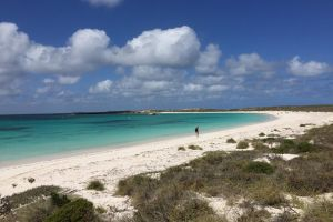 Abrolhos Island Half Day Fly and Flipper - Accommodation Broken Hill