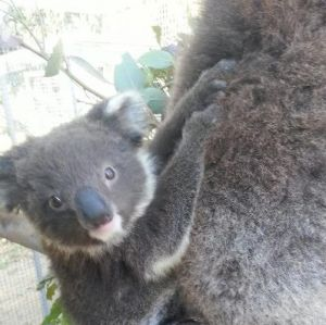 West Oz Wildlife Petting Zoos - Accommodation Broken Hill