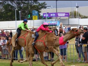 Camel Races at Gosford Showgrounds - Accommodation Broken Hill
